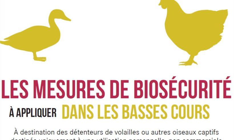 Risque de transmission de l'influenza aviaire aux volailles domestiques